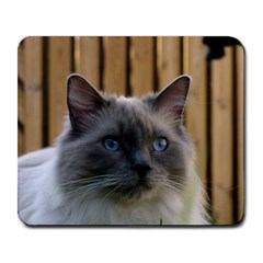 Ragdoll, Blue Large Mousepads