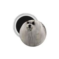 Maltese 2 1.75  Magnets