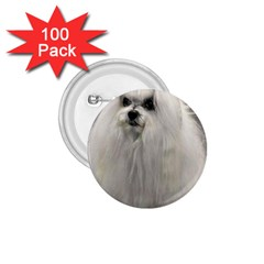 Maltese 2 1.75  Buttons (100 pack)