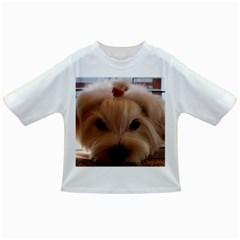 Maltese 3 Infant/Toddler T-Shirts