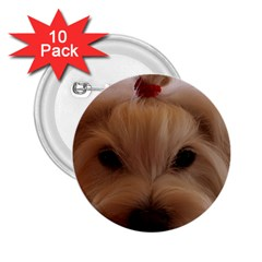 Maltese 3 2.25  Buttons (10 pack)