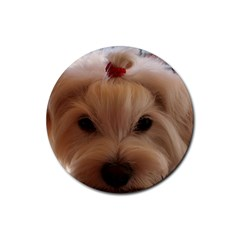 Maltese 3 Rubber Coaster (Round)