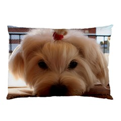 Maltese 3 Pillow Case (Two Sides)
