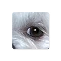 Maltese Eyes Square Magnet