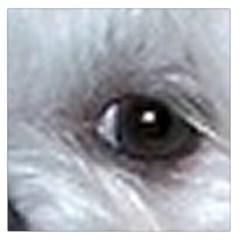 Maltese Eyes Large Satin Scarf (Square)