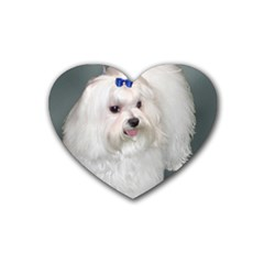 Maltese Full 2 Rubber Coaster (Heart)