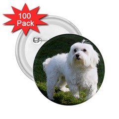 Maltese Full 2.25  Buttons (100 pack)
