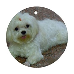 Maltese Laying Ornament (Round)