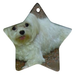 Maltese Laying Ornament (Star)