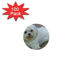 Maltese Laying 1  Mini Magnets (100 pack)
