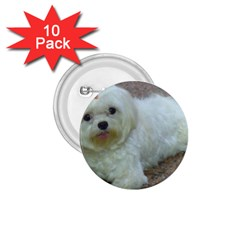 Maltese Laying 1.75  Buttons (10 pack)