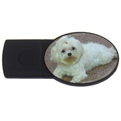 Maltese Laying USB Flash Drive Oval (4 GB)