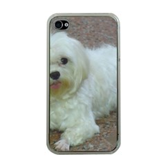 Maltese Laying Apple iPhone 4 Case (Clear)