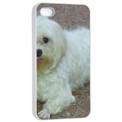 Maltese Laying Apple iPhone 4/4s Seamless Case (White)