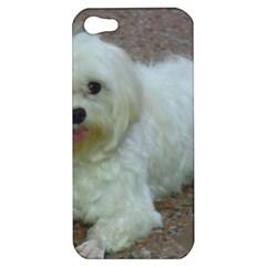 Maltese Laying Apple iPhone 5 Hardshell Case