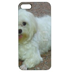 Maltese Laying Apple iPhone 5 Hardshell Case with Stand