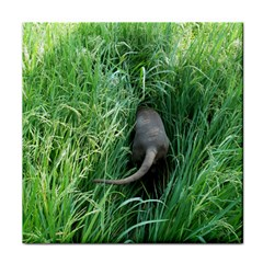 Weim In The Grass Tile Coasters