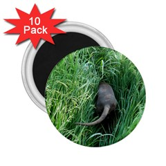 Weim In The Grass 2.25  Magnets (10 pack)