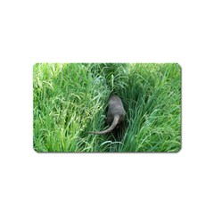 Weim In The Grass Magnet (Name Card)