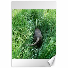Weim In The Grass Canvas 20  x 30