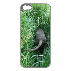 Weim In The Grass Apple iPhone 5 Case (Silver)