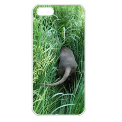 Weim In The Grass Apple iPhone 5 Seamless Case (White)
