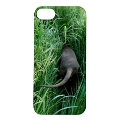 Weim In The Grass Apple iPhone 5S/ SE Hardshell Case