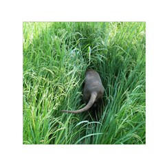 Weim In The Grass Small Satin Scarf (Square)