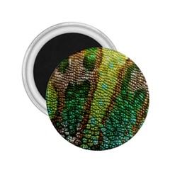 Chameleon Skin Texture 2 25  Magnets