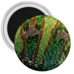Chameleon Skin Texture 3  Magnets