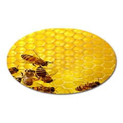 Sweden Honey Oval Magnet