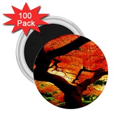 Maple Tree Nice 2.25  Magnets (100 pack)