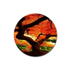 Maple Tree Nice Magnet 3  (Round)