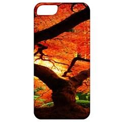 Maple Tree Nice Apple iPhone 5 Classic Hardshell Case