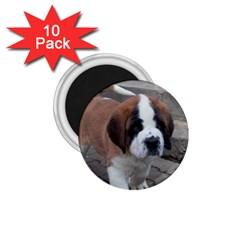 St Bernard Pup 1.75  Magnets (10 pack)
