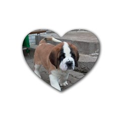 St Bernard Pup Heart Coaster (4 pack)
