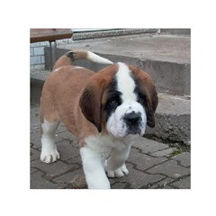 St Bernard Pup Small Satin Scarf (Square)