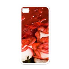 Nice Rose With Water Apple iPhone 4 Case (White)
