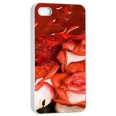 Nice Rose With Water Apple Iphone 4/4s Seamless Case (white)