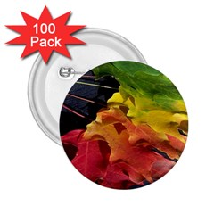 Green Yellow Red Maple Leaf 2 25  Buttons (100 Pack)
