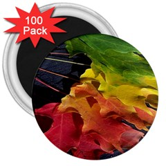 Green Yellow Red Maple Leaf 3  Magnets (100 Pack)