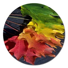 Green Yellow Red Maple Leaf Magnet 5  (round)