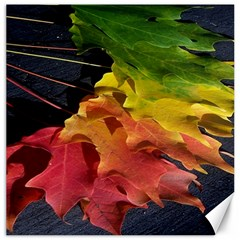 Green Yellow Red Maple Leaf Canvas 12  X 12