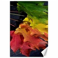 Green Yellow Red Maple Leaf Canvas 12  x 18