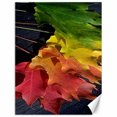 Green Yellow Red Maple Leaf Canvas 18  x 24