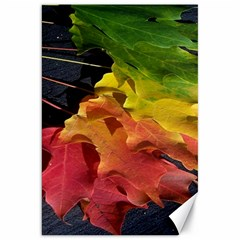 Green Yellow Red Maple Leaf Canvas 20  X 30