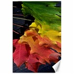 Green Yellow Red Maple Leaf Canvas 20  x 30   30 x20 Canvas - 1