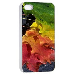 Green Yellow Red Maple Leaf Apple Iphone 4/4s Seamless Case (white)