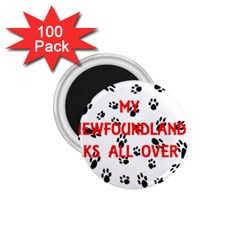 My Newfie Walks On Me 1.75  Magnets (100 pack)