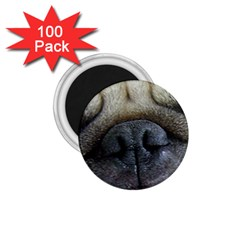 Pug Fawn Eyes 1.75  Magnets (100 pack)